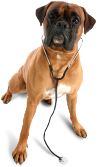dog with stethescope
